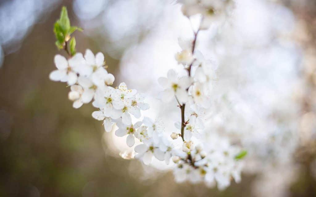 Ostern bei uns. Schnupper-Frühling im Februar.