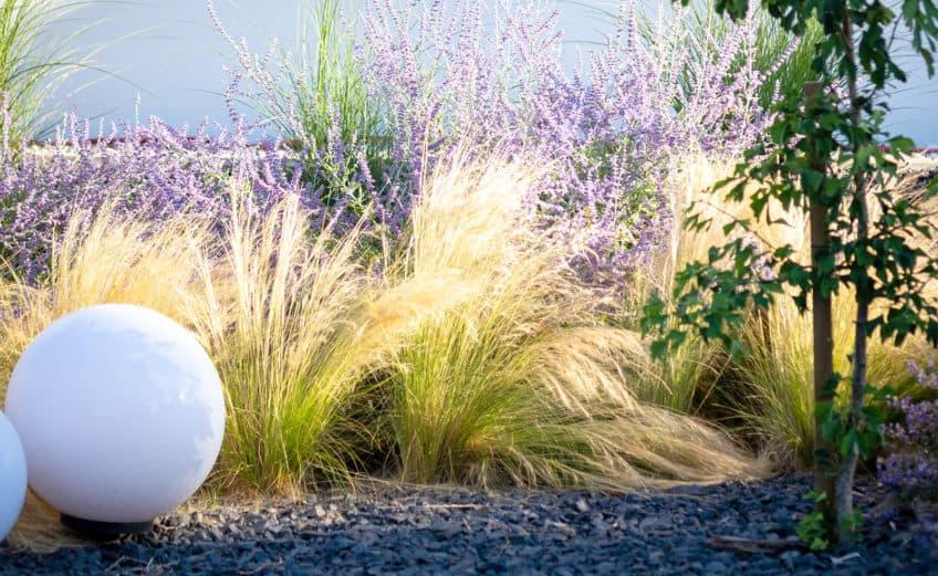 Pflanzplan: sonniger Vorgarten mit Gräsern, Eisenkraut, Blauraute, Sanddorn und Salbei