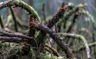Foto-Tipps für den Herbst - Herbst Fotografieren