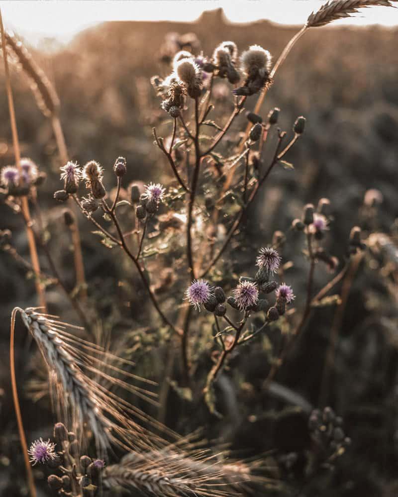 Foto-Tipss für den Herbst - Weiches Herbstlicht fotografieren