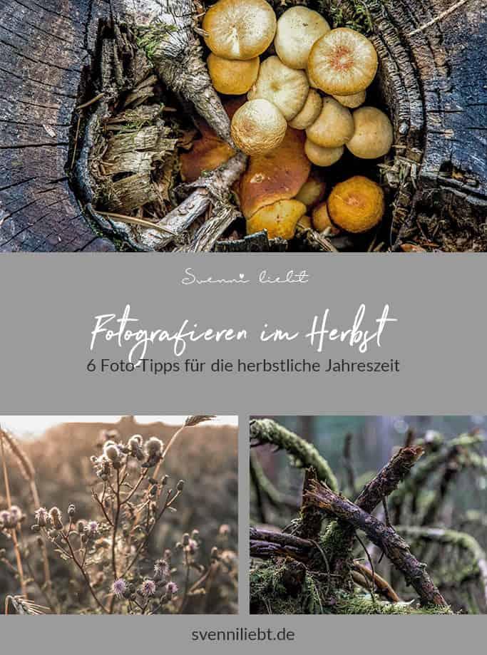 6 Foto-Tipps für den Herbst