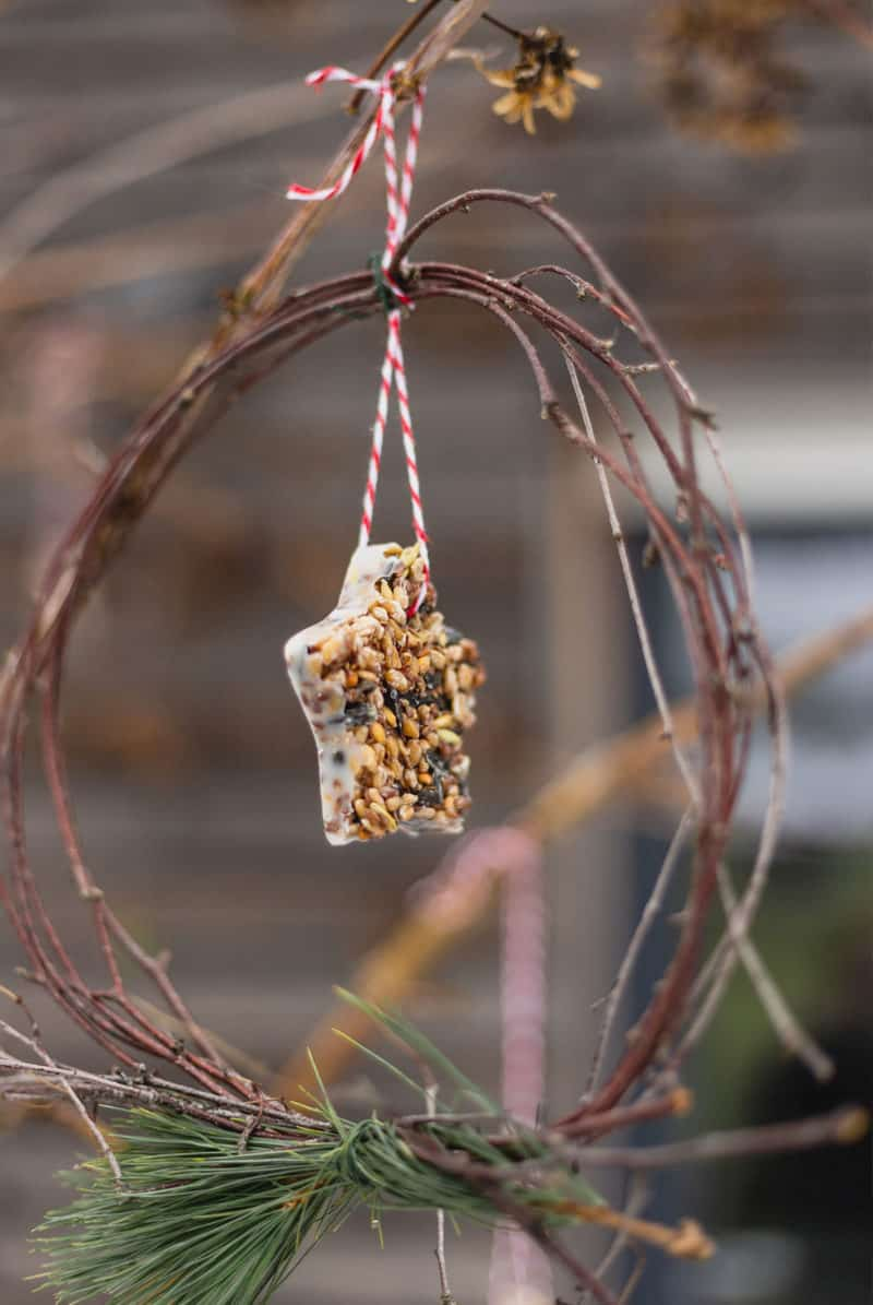 DIY Vogelfutter für die Futterstation