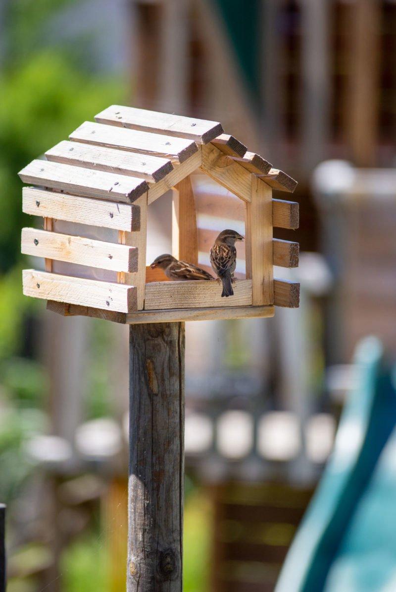 Die Vögel lassen sich das Futter schmecken