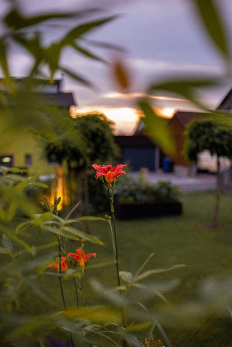 Unser Garten im Juni