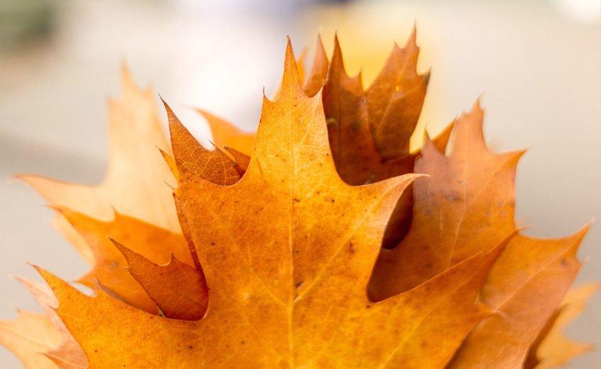 Herbst Bucket List - 30 Ideen für Herbst-Genießer